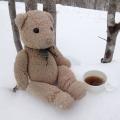 Bear.H