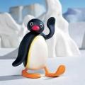 penguin1005
