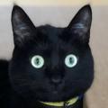 墮落的黑貓