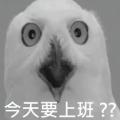kazomu1120w