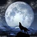 狼0225