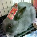 店小二_黑兔