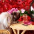 玫瑰兔寶寶