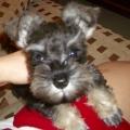 doggy0104