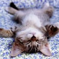 bbs水電貓