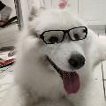 husky_ky