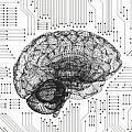 neuromorphics