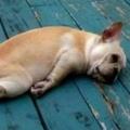 比狗還累的人生