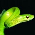 夢幻A小蛇