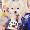 Hanhan~~