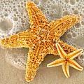 深海裡的派大星