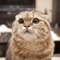 Cat貓貓喵