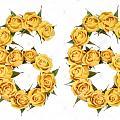 flower66