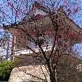 leoslcheng