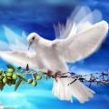 peace 911
