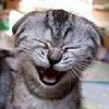 lnightcat