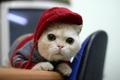 gamecat