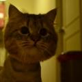 Lumi Cat