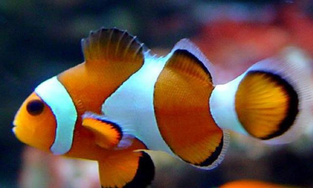 冬天的熱帶魚