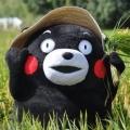 bear1111