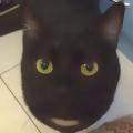 noisycat