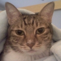 cat05271975