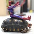 tortoise0818