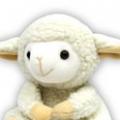 江西羊咩咩