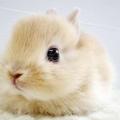 JENNY 兔比