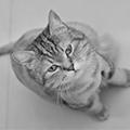 二毛&卷卷貓