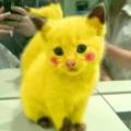 真˙霹靂貓