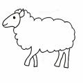 綿羊偶爾會帶路噢