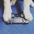 GamingPug
