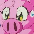 悲天少女豬