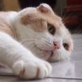 agnestcat