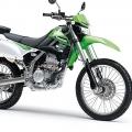 綠豆521